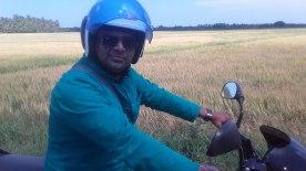 Meer-Ali-ricefields-1
